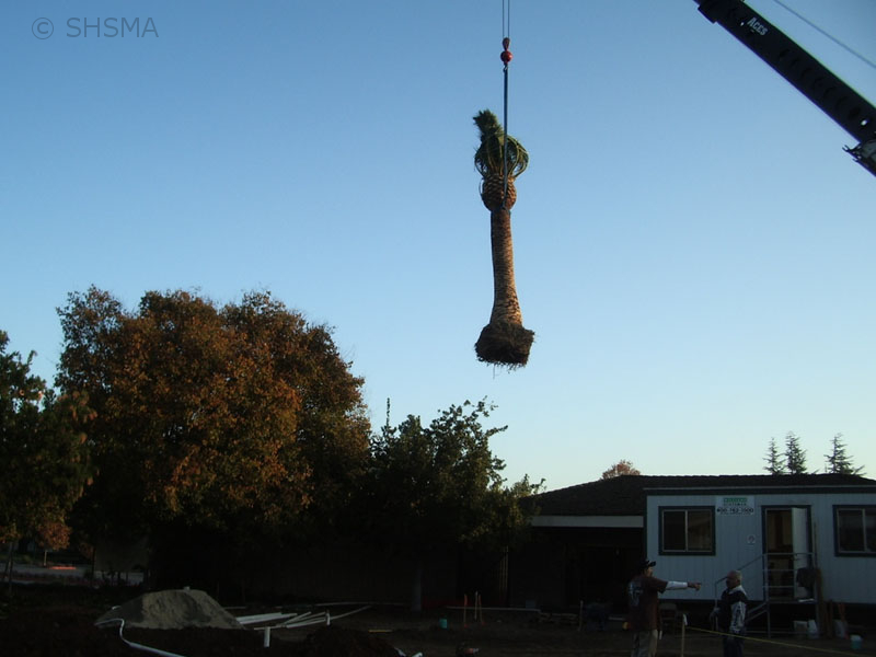 November 2, 2007 — Famous Murphy Palm Trees Arrive