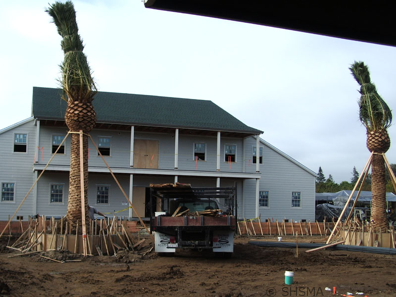 November 12, 2007 — Murphy Palm Trees Planted