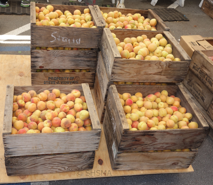 Boxes of apricots, June 16, 2015