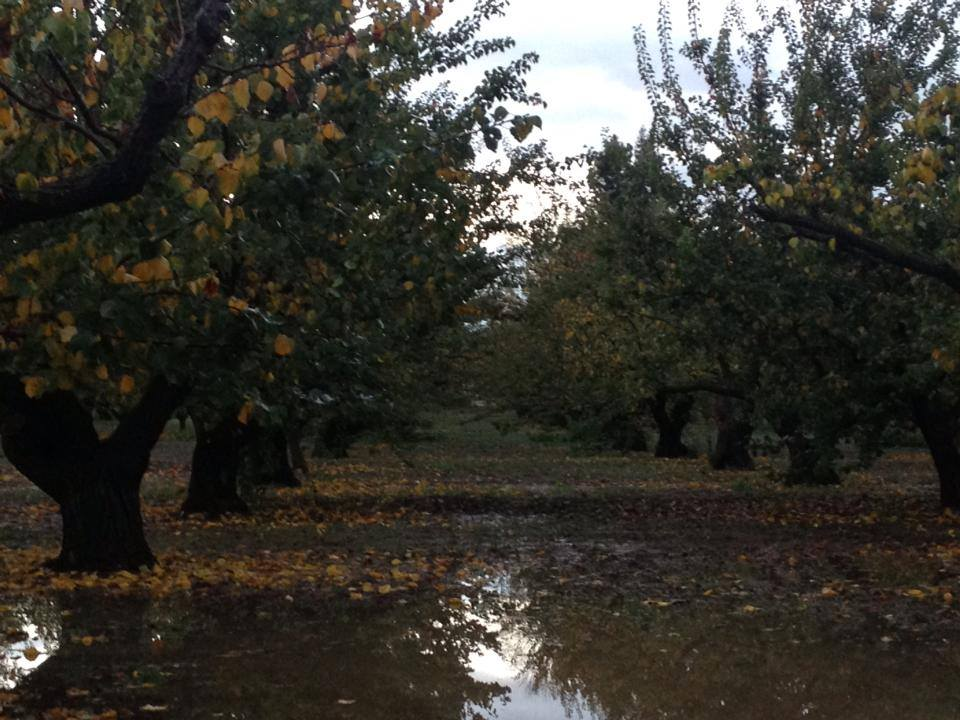 Leaves turn orange and fall onto reflective rain puddles, November 20, 2013