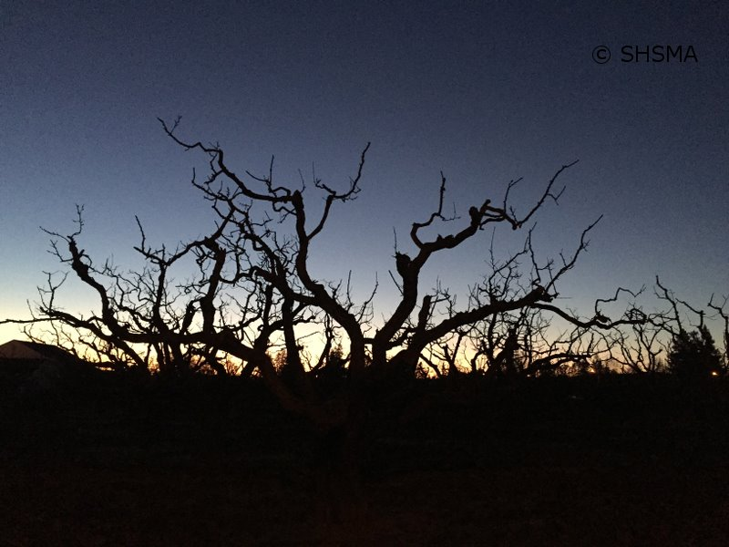 A cold, clear dawn in the dead of winter, January 13, 2015