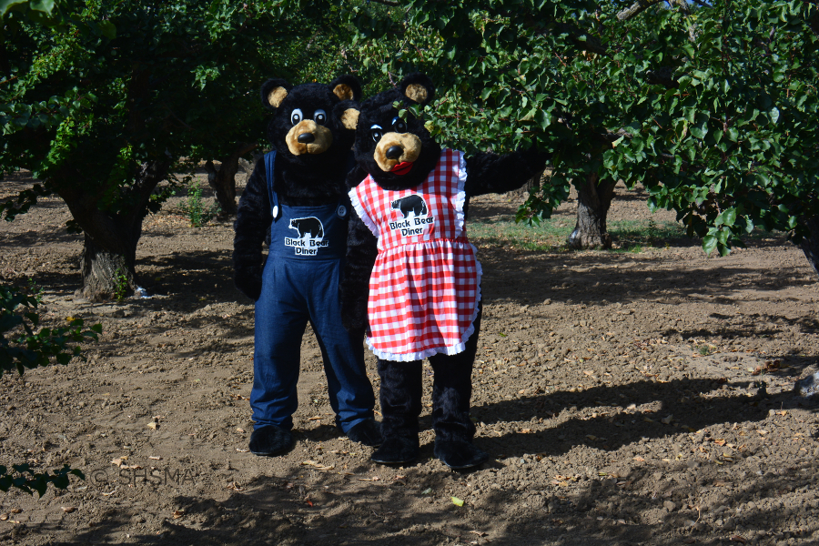 Papa and Mama Bear in the Heritage Orchard