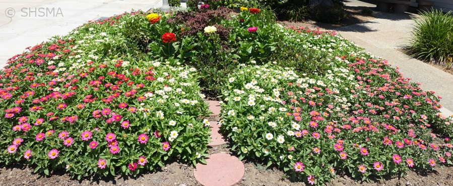 More Summer Annuals, July 3, 2016