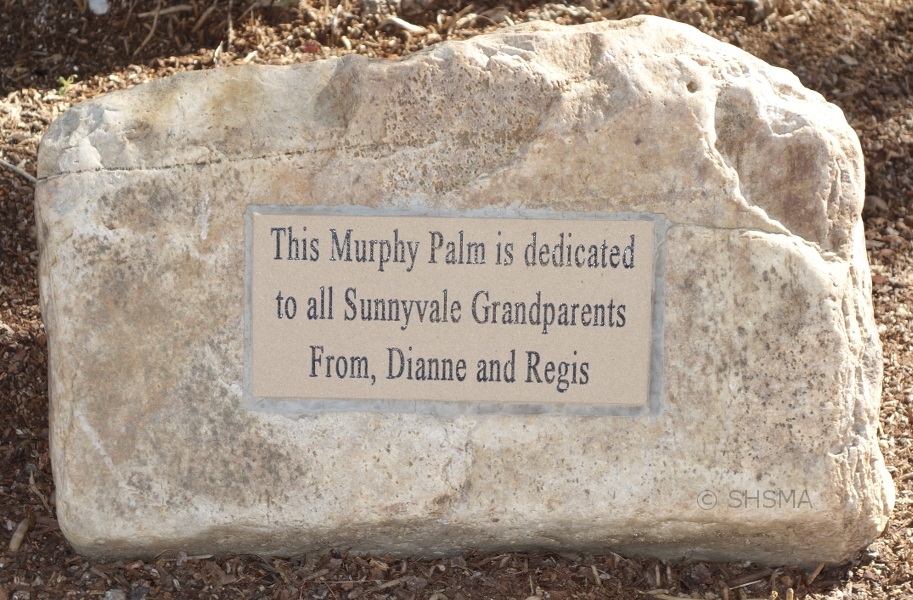 This Murphy Palm is dedicated to all Sunnyvale Grandparents from Dianne and Regis