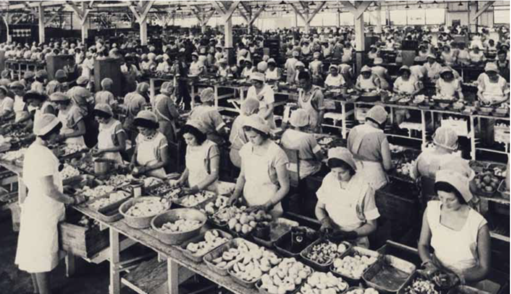 Assembly at Schuckl Cannery, Sunnyvale. Date unknown.