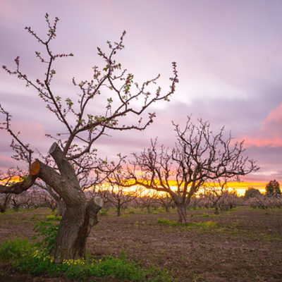 A Continuing Commitment to Preserve the Heritage Orchard